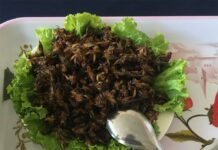 Fried Cricket at Cricket-Farm,-Ho-Chi-Minh-City,-Vietnam2