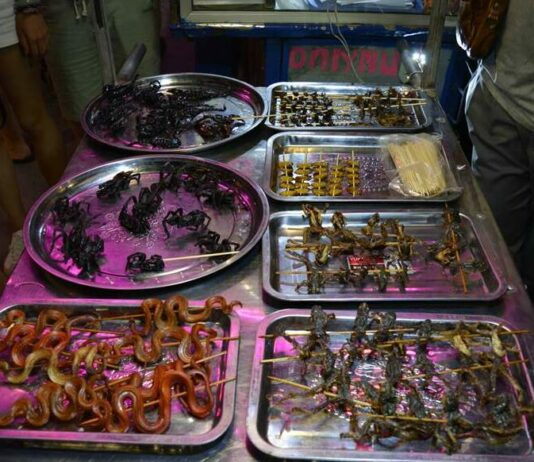 Insects, Snakes, Frogs Cart Siem Reap Cambodia